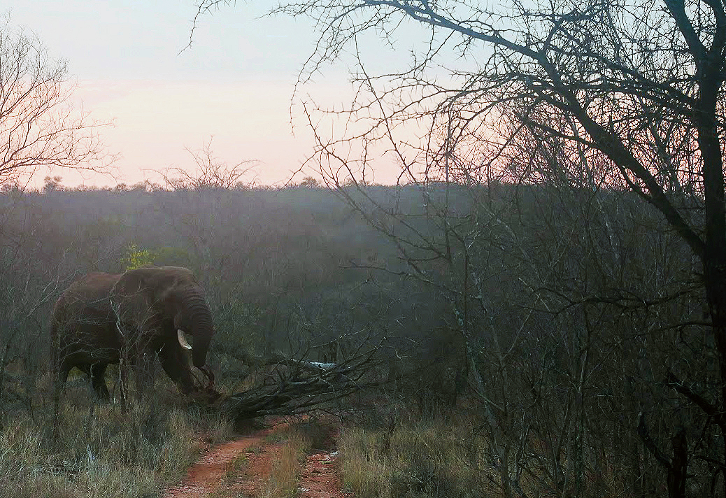 A safari in South Africa | Elephant tipping over a tree in South Africa | EyeWearThese