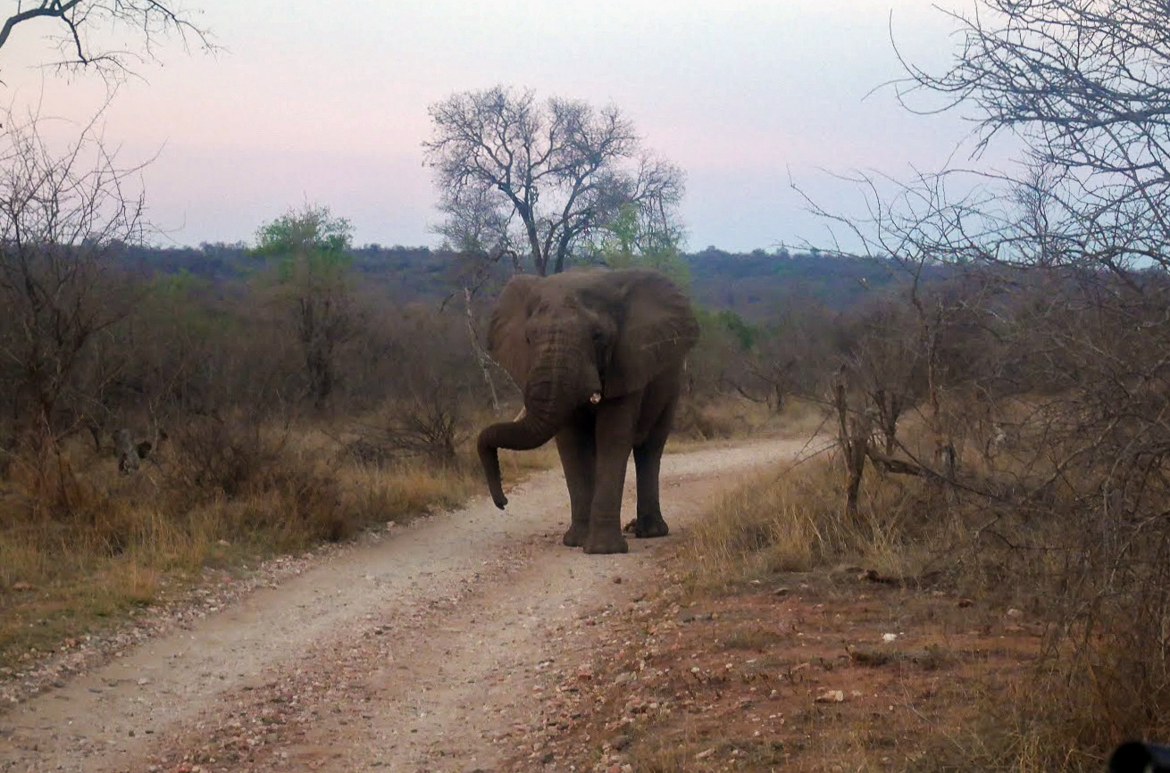 A safari in South Africa | Elephant walking in South Africa | EyeWearThese