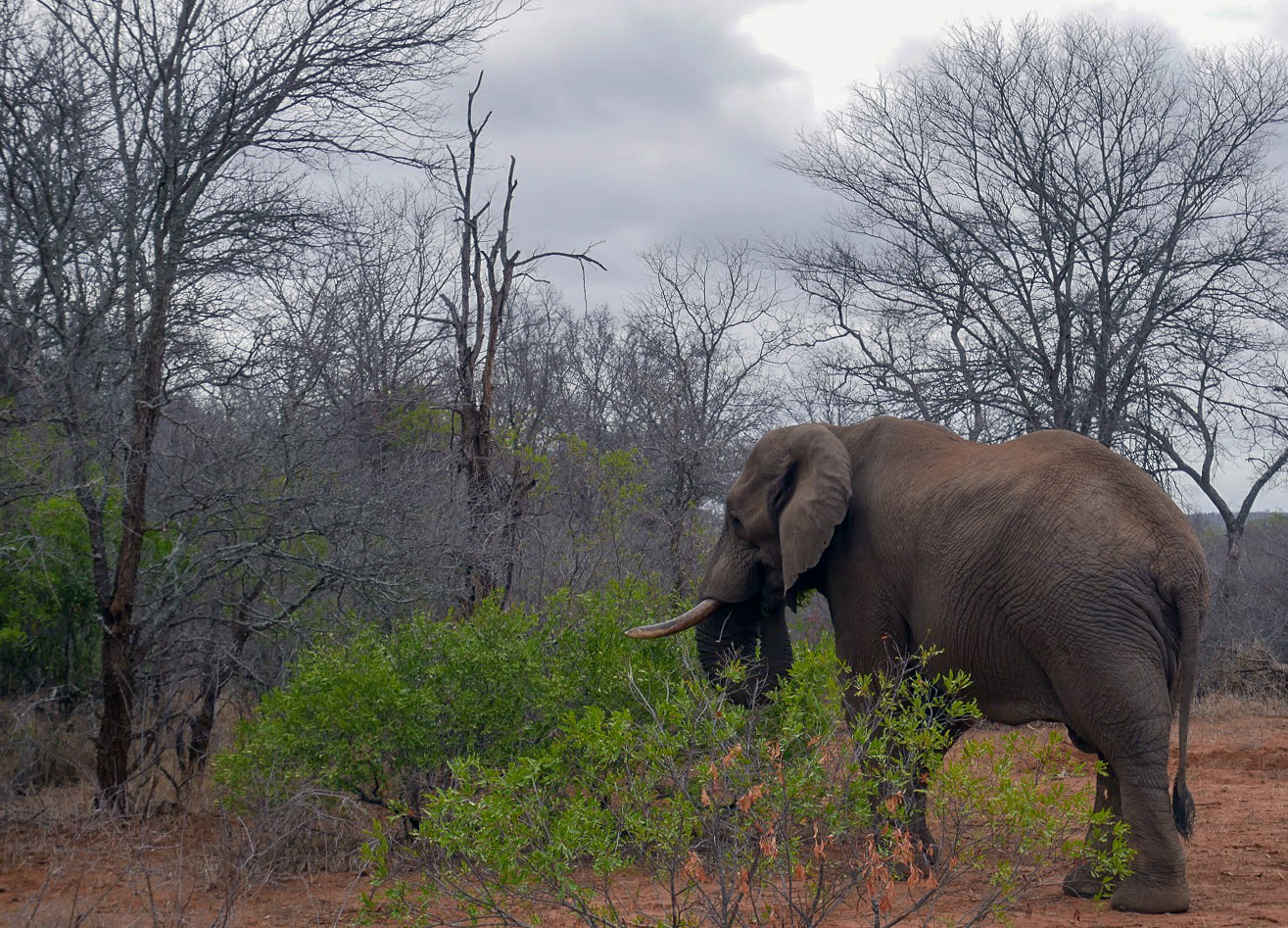 A safari in South Africa | Elephant in South Africa | EyeWearThese