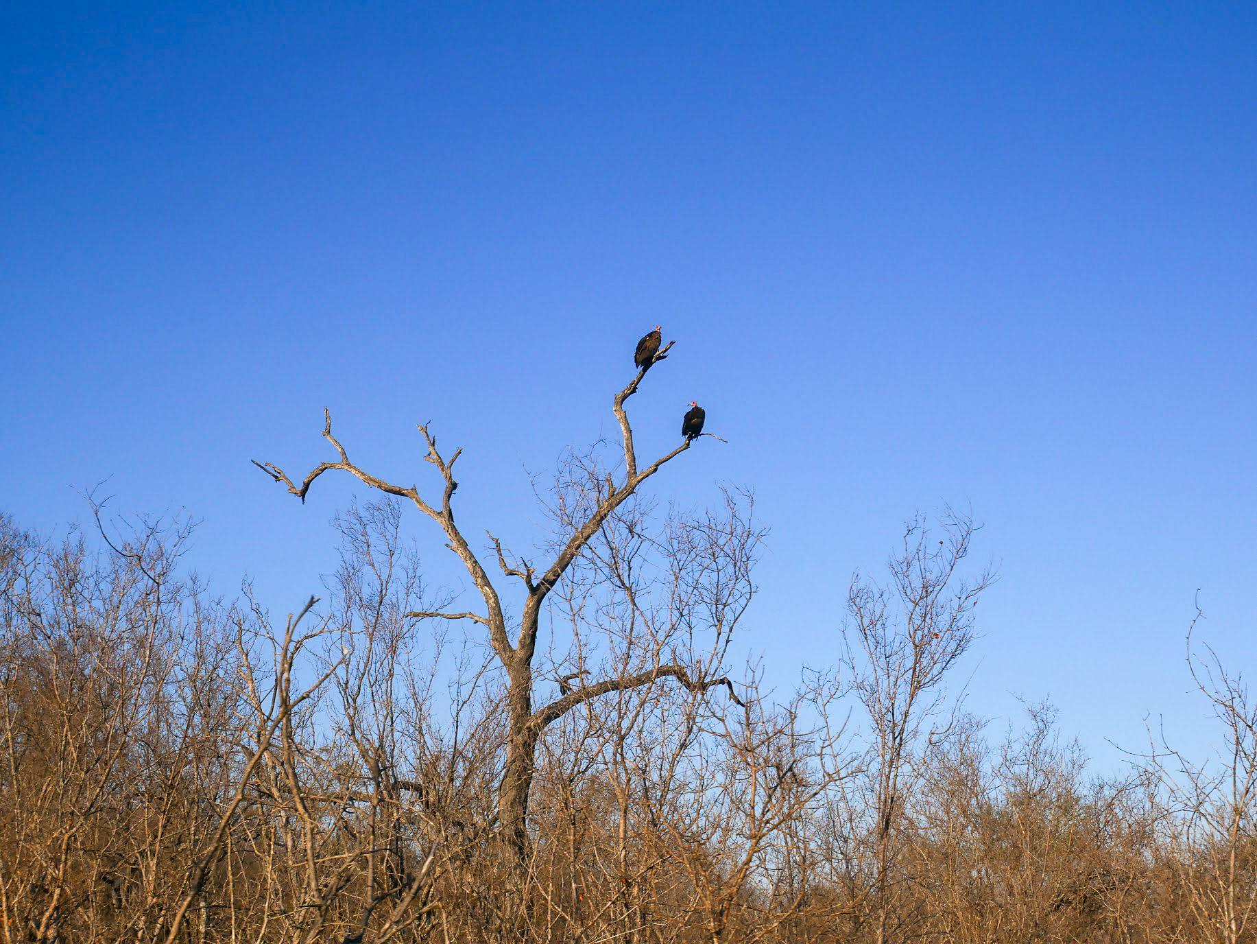 A safari in South Africa | Vultures sitting in a tree in South Africa | EyeWearThese
